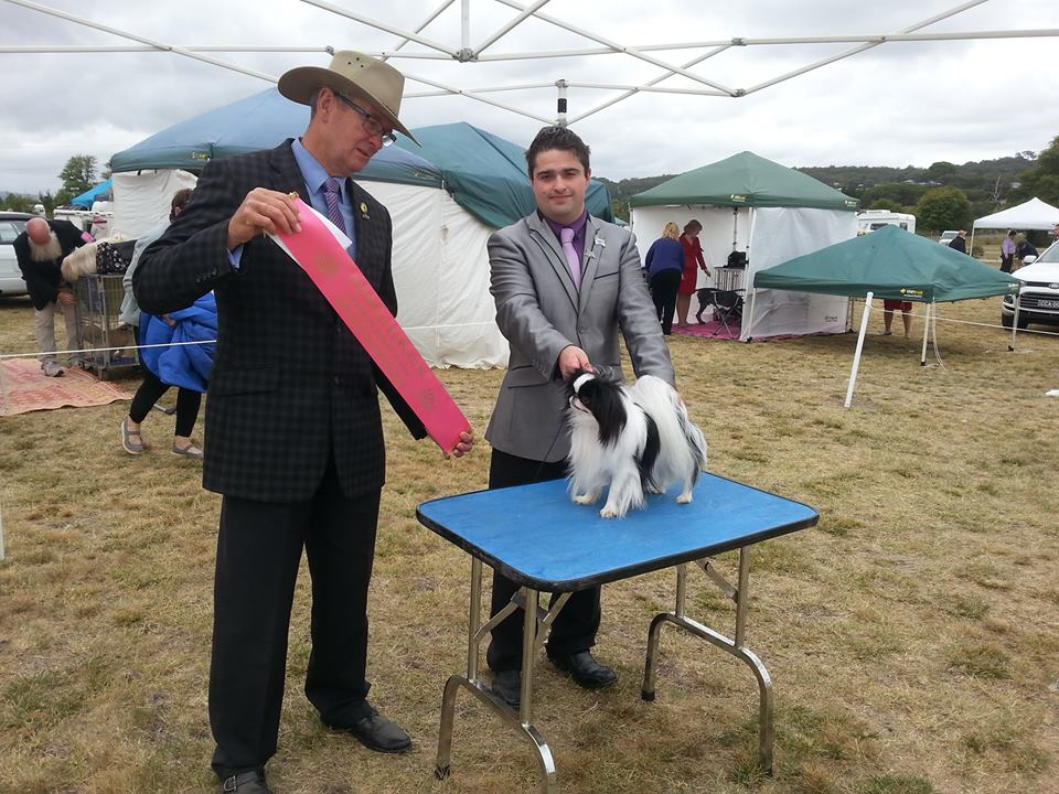 Champion Dog Show Tarago